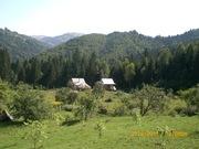 Зелёный отдых в Карпатах