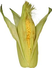 Cемена кукурузы производство Польши