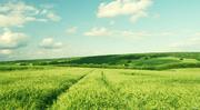 Дорога закупівля олійних та зернових у виробника